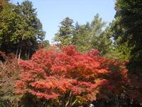 02) 鎌倉「覚園寺」の紅葉_10.11.27.JPG